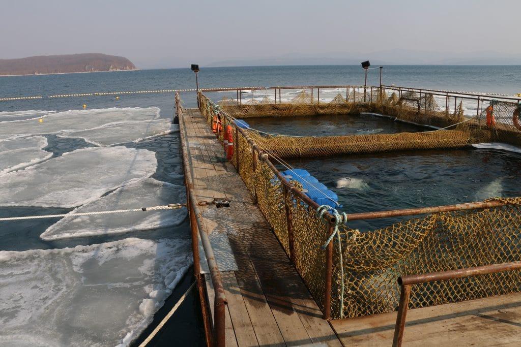 Russisches Walgefängnis geschlossen – letzte Belugas freigelassen