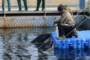 Walgefängnis in Russland: Wissenschaftliche Unterstützung für die Freilassung