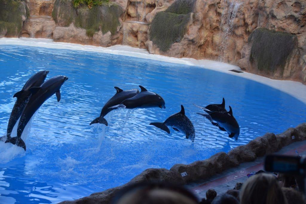 Delfine im Loro Parque, Teneriffa