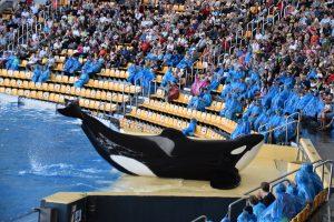 Kanarische Inseln: Nachhaltiges Whale Watching statt Delfinarienbesuch