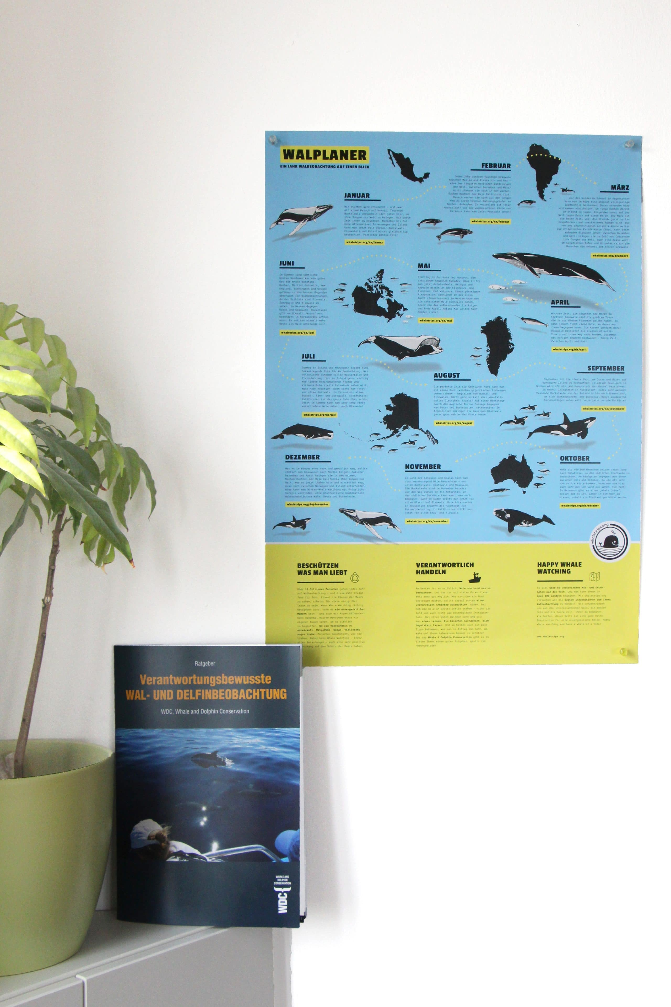 Whale Watching Guide - Walbeobachtungsratgeber und Walplaner Poster