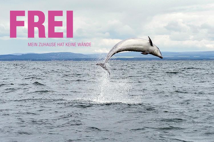 FREI Kampagne gegen Delfinarien