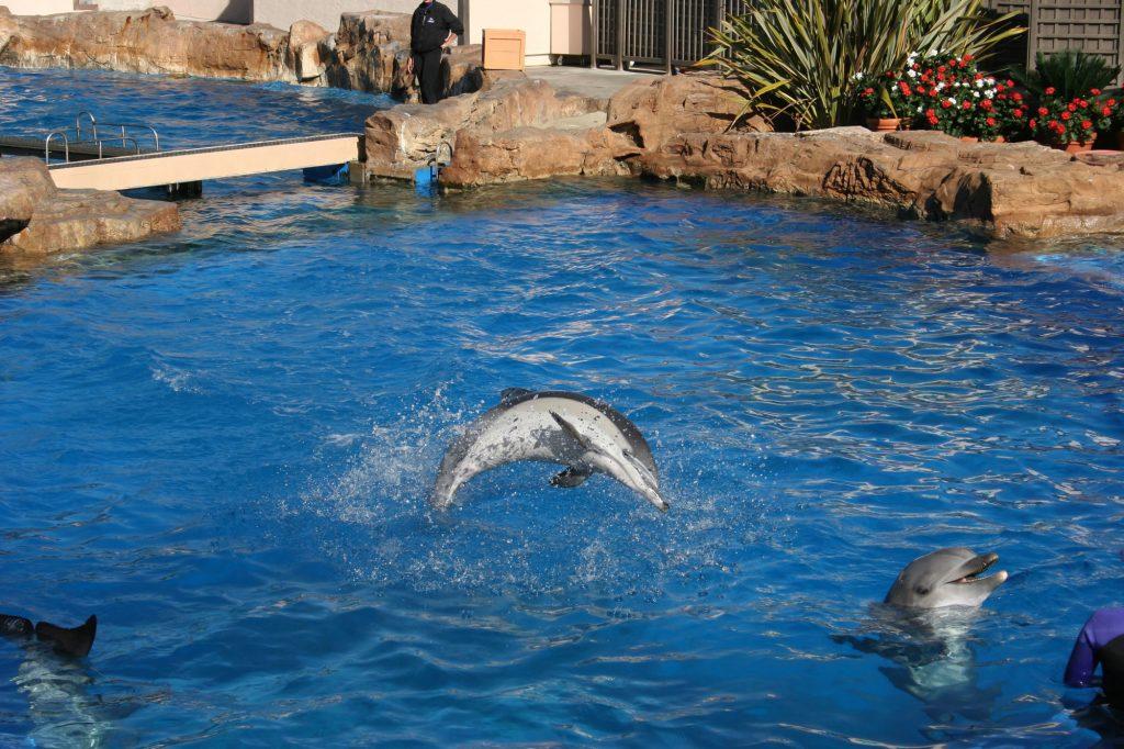Delfine in Gefangenschaft