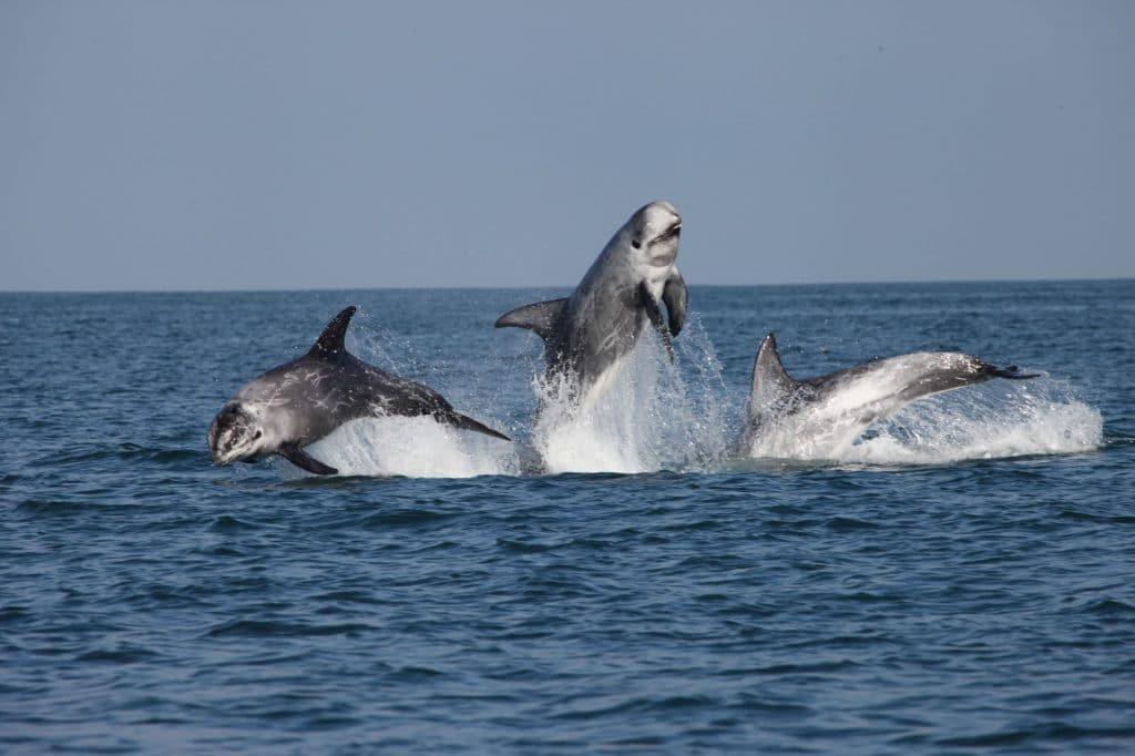 Meine unglaubliche Woche als Delfinforscherin auf Zeit