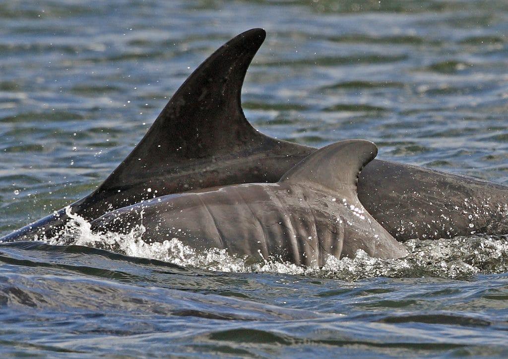 Delfin Neugeborenes Baby