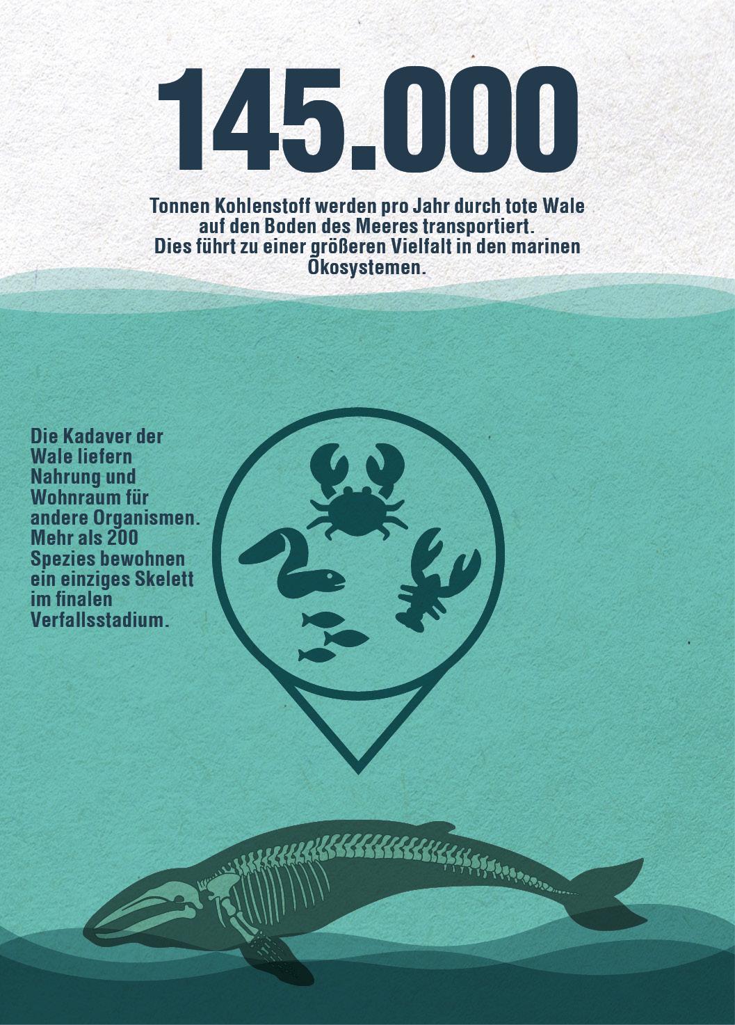 Infografik Wale Klimakrise Kohlenstoff