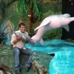 Museum-Flussdelfine-Projekt