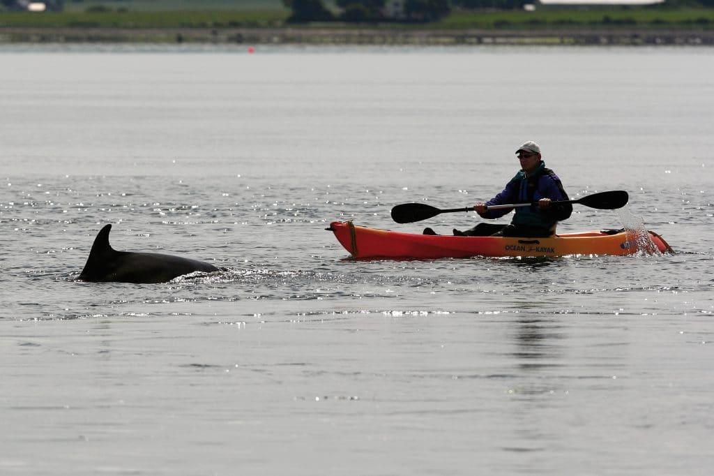 Abstand halten! Leitlinien für die Wal- und Delfinbeobachtung