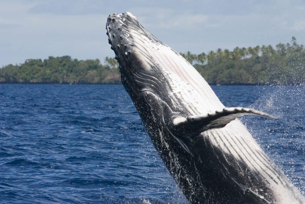 Wale, Delfine und gesunde Meere in Zeiten des Lockdowns