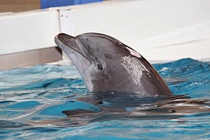 Zwei junge Delfine sterben in europäischen Freizeitparks