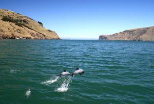 WDC erwirkt bedeutenden Sieg im Kampf für die kleinsten Delfine der Welt