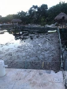 Besorgniserregende Wasserqualität in Delfinarium in Mexiko
