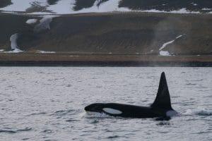 World Orca Day: besondere Begegnungen