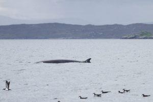 Walfang in Japan kämpft um Absatz