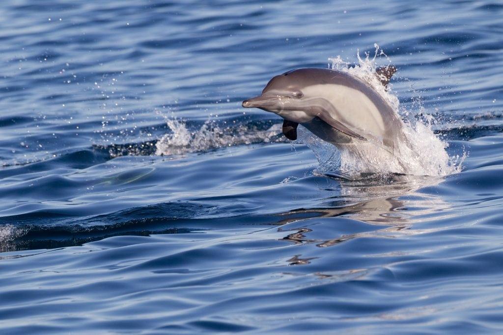 Darwin-Initiative unterstützt Wal- und Delfinschutzarbeit in Senegal