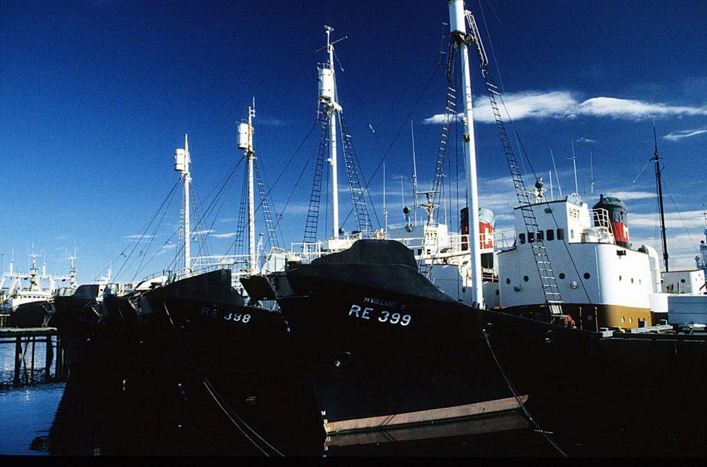 Aktionärsstreit könnte isländisches Walfang-Unternehmen zu Fall bringen
