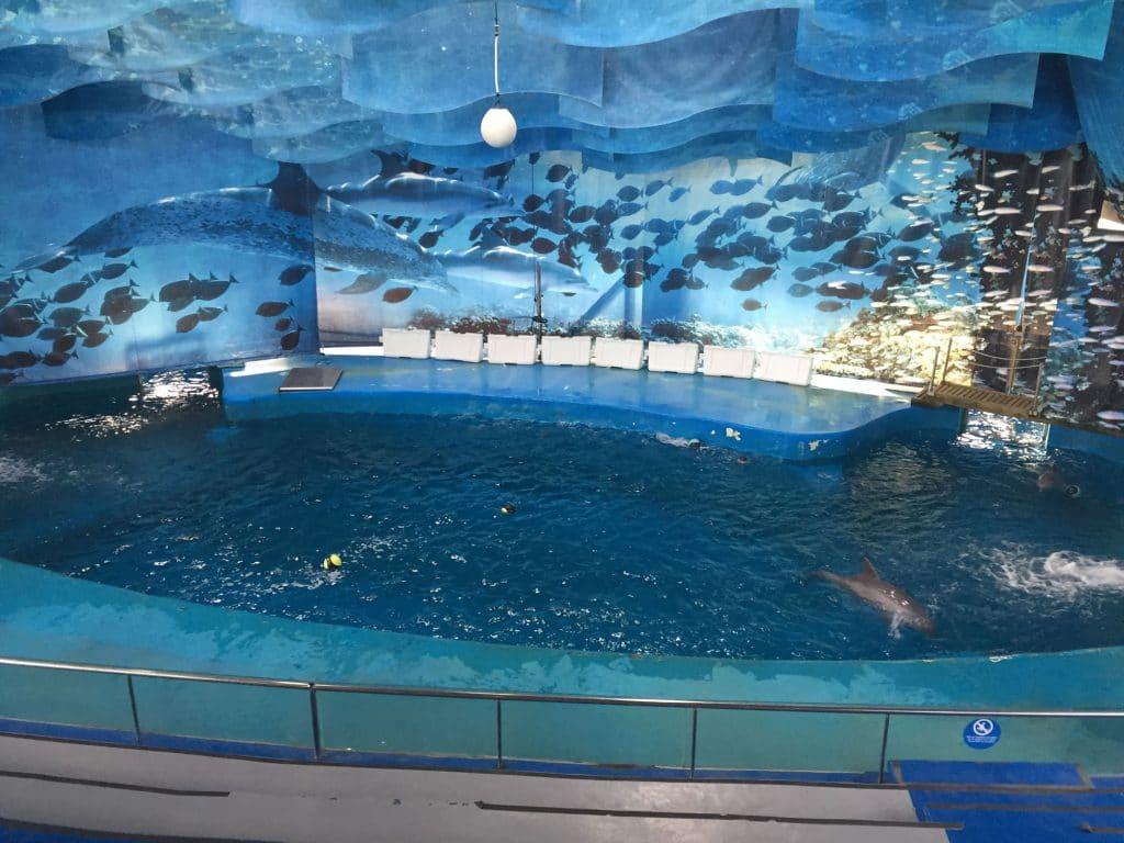 Delfine in Gefangenschaft werden von Barcelona nach Griechenland gebracht