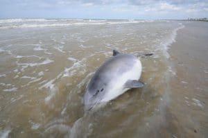 Erneute Kritik an Managementplänen für Meeresschutz in Nord- und Ostsee