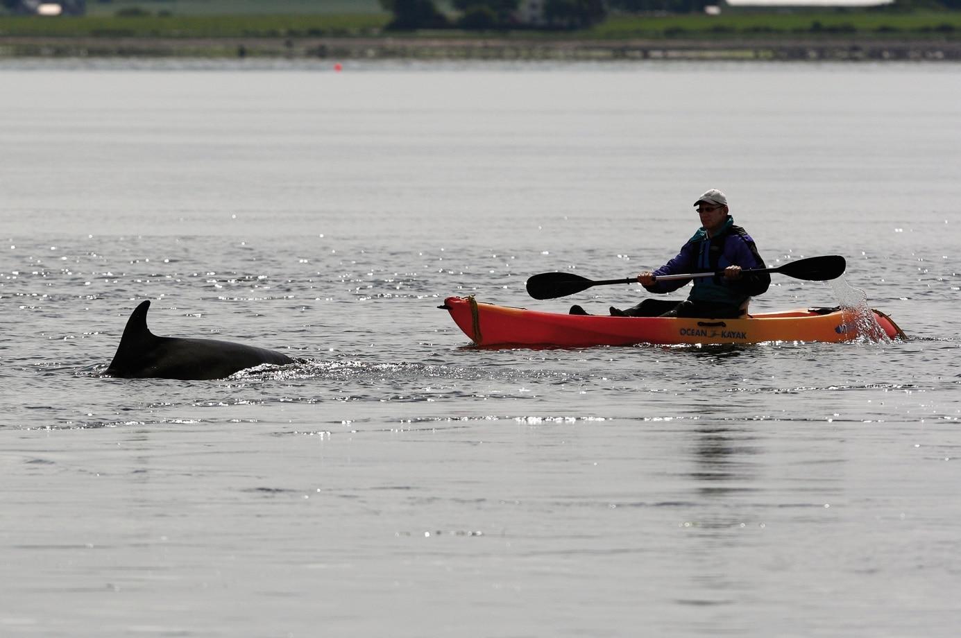 Der Verhaltenskodex für die Beobachtung von Walen und Delfinen in Deutschland sieht vor allem vor: Abstand halten! (C) Charlie Philips, WDC