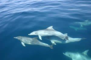 Radioaktives Kühlwasser im Meer: Bedrohung für Meeressäuger?