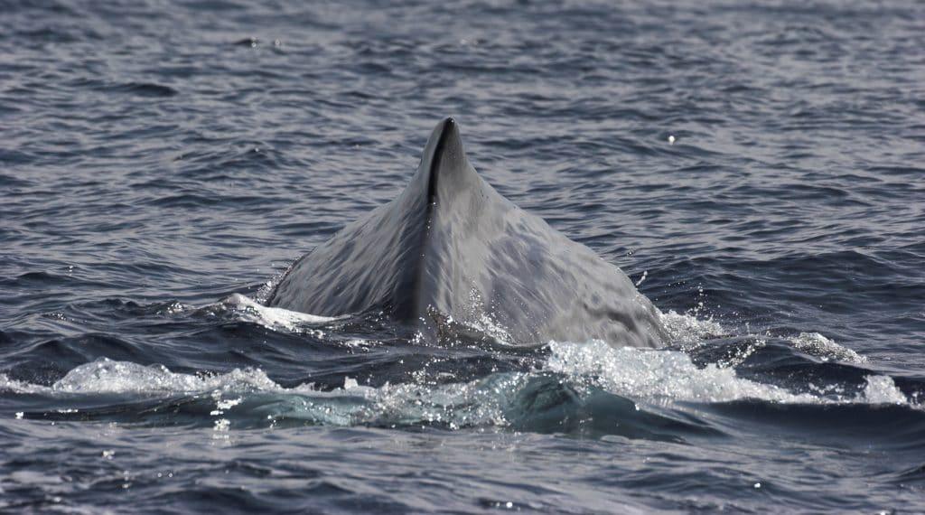 Vom Walfang zur Walbeobachtung