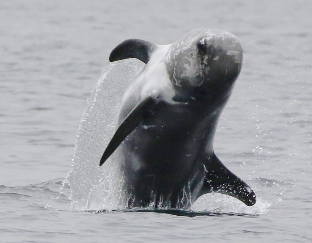 Die brutale Jagd in Taiji: Einer Delfinforscherin bricht das Herz