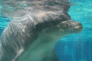 Das Ende von Delfinarien in den USA – wie unser Kampf weitergeht