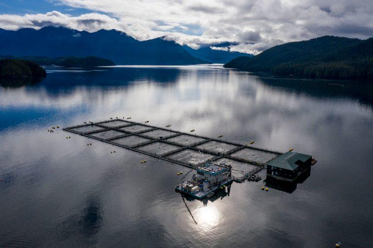 Ende für die Fischzucht bei den Discovery Islands