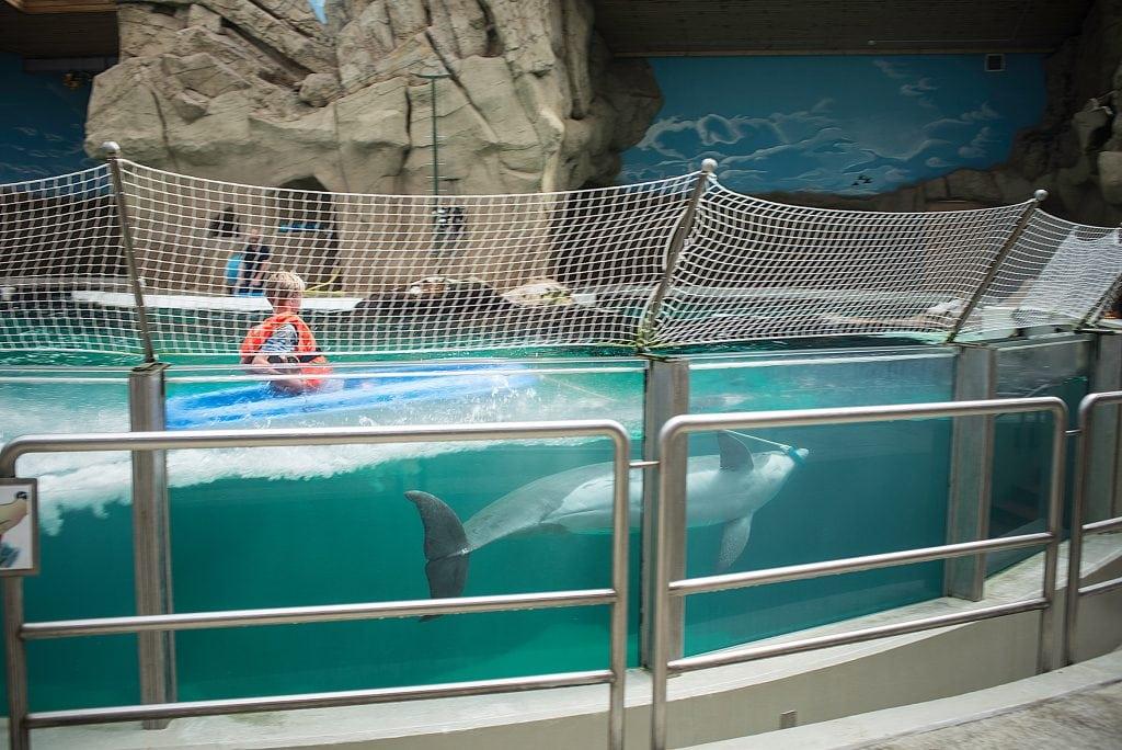 Neues Delfinbaby in Duisburg