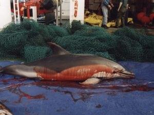 EU nimmt den Tod unzähliger Delfine und Schweinswale in Kauf