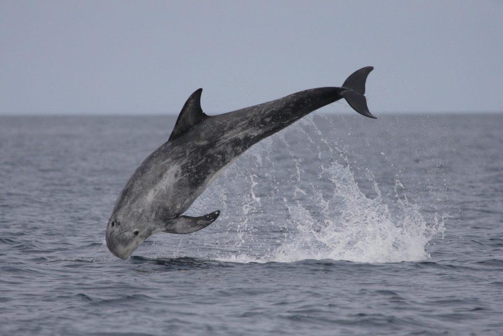 Kampagnenerfolg: Drei neue Meeresschutzgebiete vor Schottland!