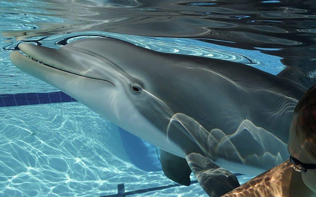 Roboter-Delfine: eine Alternative für Delfinarien?
