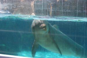 Delfin in Gefangenschaft (C) Rob Lott