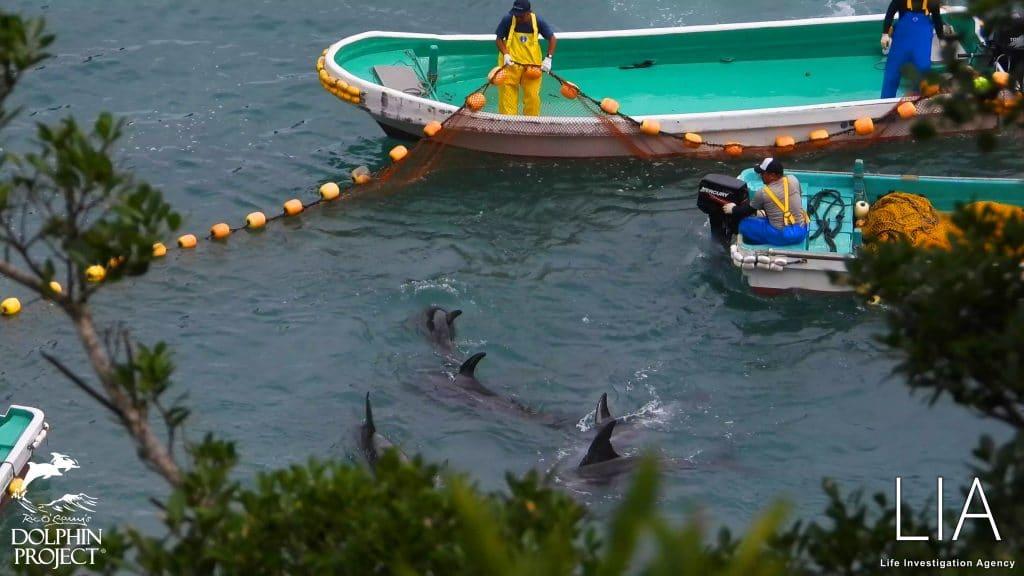 (C) LIA und Dolphin Project