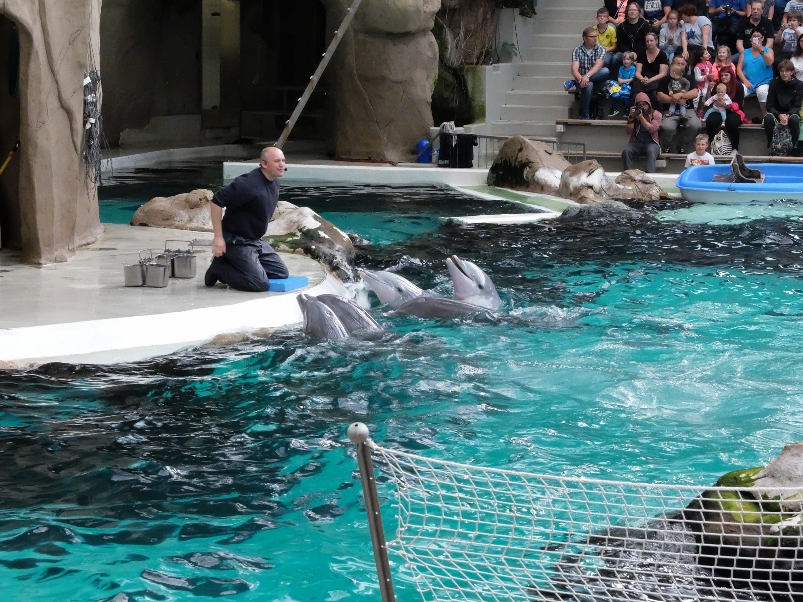 Delfinshow im Delfinarium Duisburg (C) David Pfender