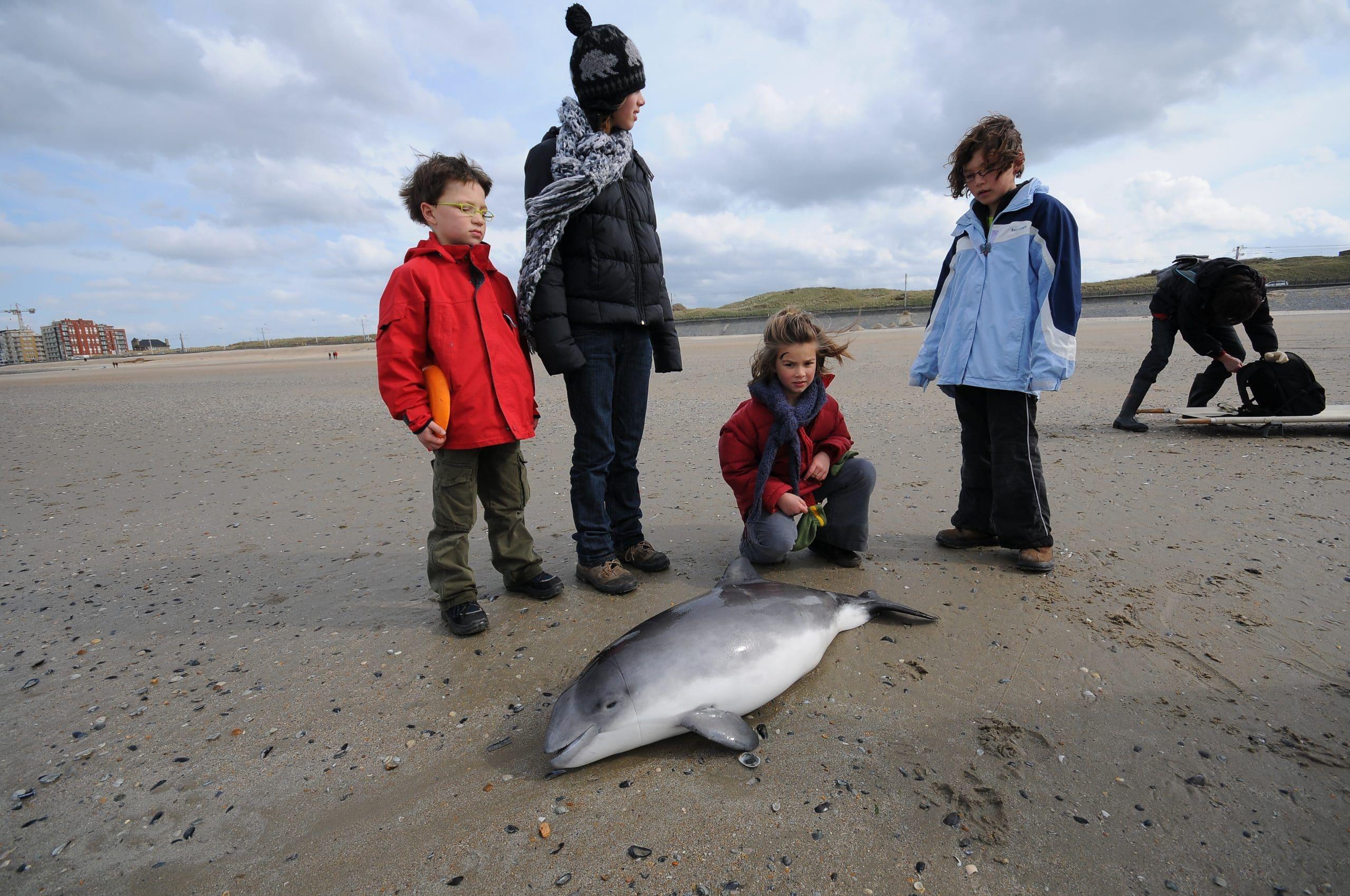 Können wir den Ostsee-Schweinswal noch rechtzeitig retten? (C) Jan Haelters