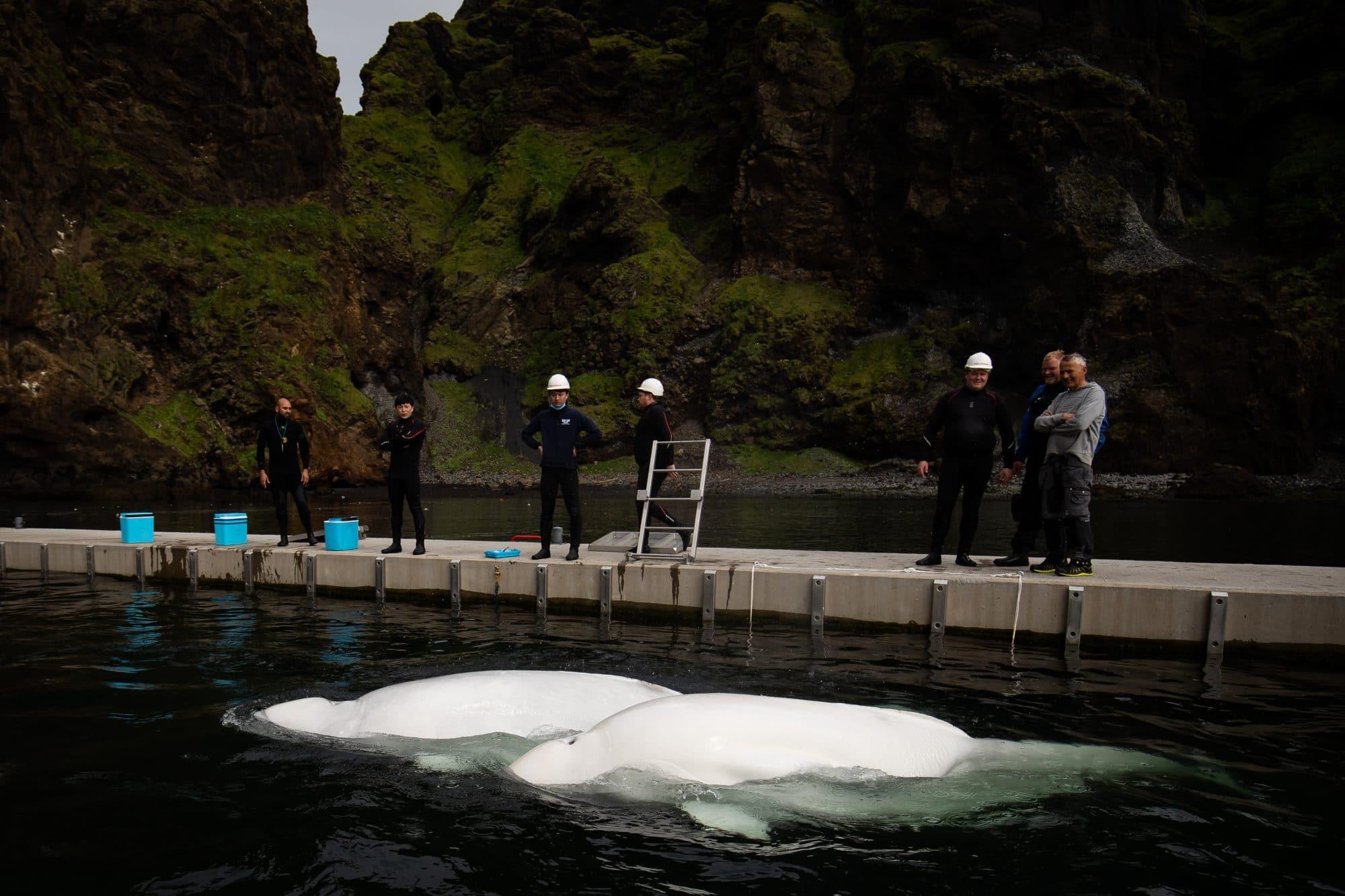 Little White und Little Grey in ihrem Refugium vor Island im Sommer 2020. (C) SEA LIFE TRUST