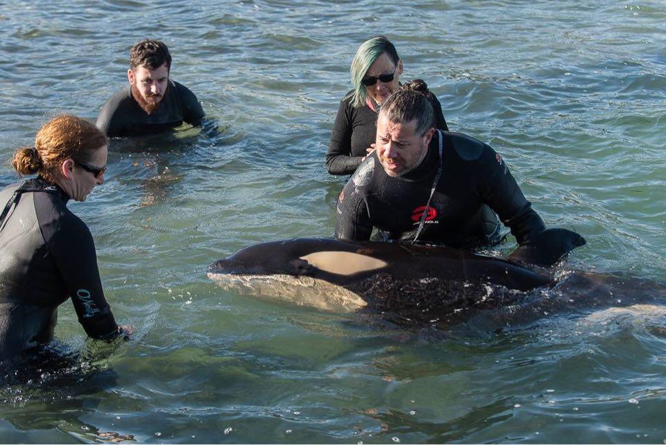 (C) Whale-Rescue.org