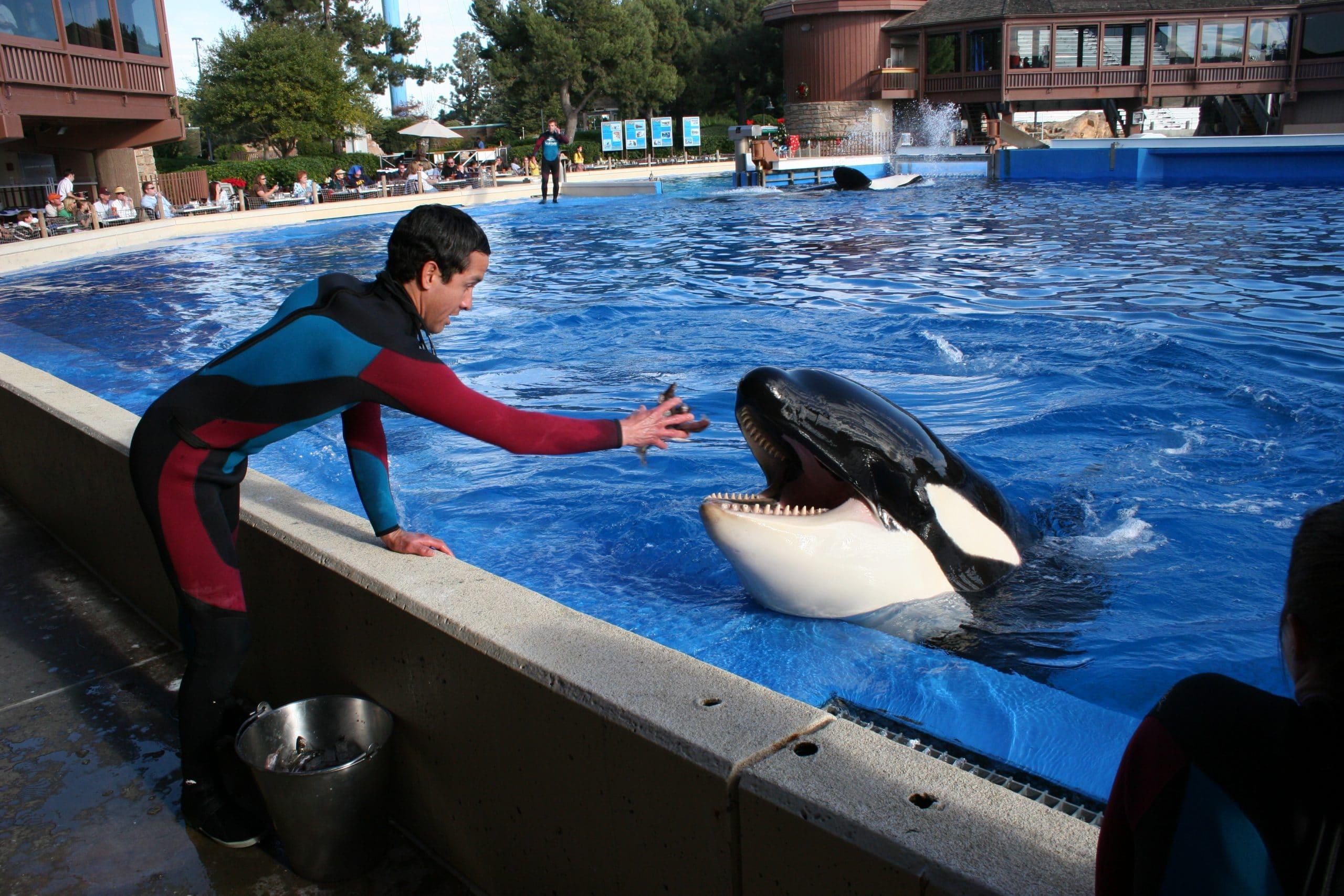 Orca mit Trainer in SeaWorld (C) Rob Lott