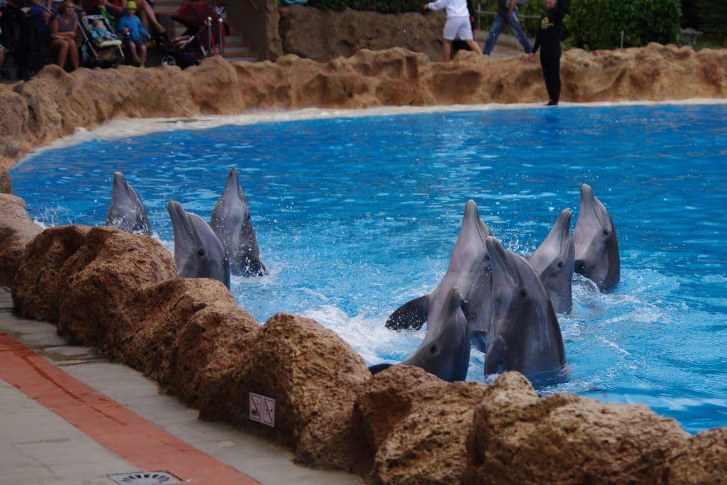 Delfine im Loro Parque