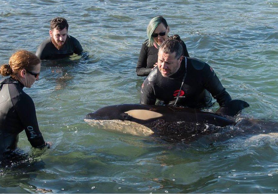 Rescue-team01_C_Whale-Rescue.org