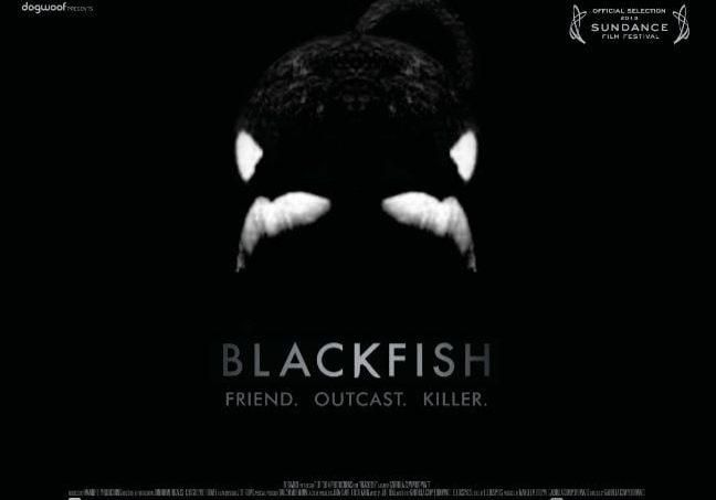 blackfish Dokumentation