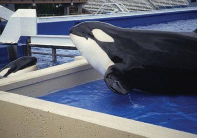 orcas_swsd_socializingthroughbarriers